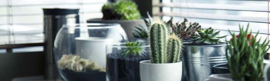 Traslocare con le piante: 5 dettagli da rispettare