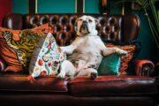 come traslocare un divano?